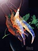 富山湾の白い宝石「白海老」