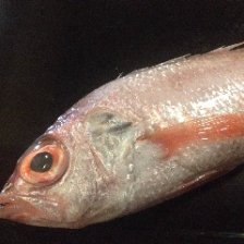 新鮮な魚介類