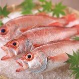 新鮮鮮魚(日替わり)【金沢】