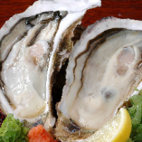 殻付きの牡蠣(宮城県産)