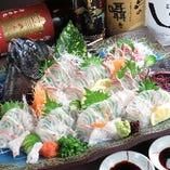 【九州産】活石鯛/石垣鯛