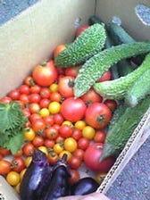 【鮮度抜群】自家農園で採れる野菜!