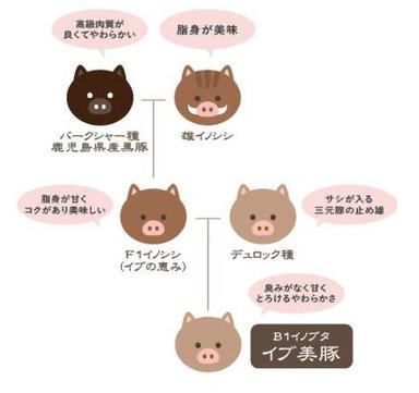 しゃぶしゃぶ すき焼き はるな 東梅田店  メニューの画像