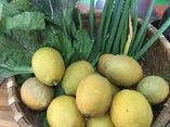 寝屋川で私が創る自家栽培完全無農薬野菜を少しずつ【大阪府 寝屋川】