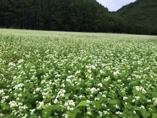 会津のかおりは、南会津郡南会津町で栽培されております。