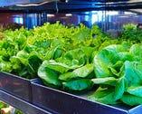 巨大LED冷蔵庫必見!これ全部食べ放題!葉によって味も違います