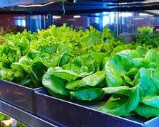 水耕栽培の新鮮野菜!人気のサンパ料理