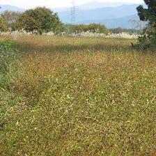 イチカラ畑の生蕎麦