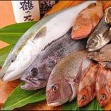 毎朝「岩船」と「佐渡が島」から直送される魚【新潟県】