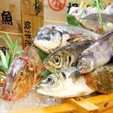 【漁業権=鮮魚】刺身の鮮度が抜群!