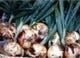 タマネギは淡路産の甘味のある玉葱で調理します