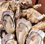 全国各地の牡蠣(生牡蠣・岩牡蠣)