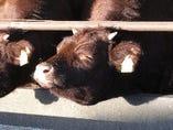 北海道産「短角牛」【北海道】