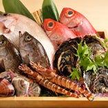 近海の天然鮮魚を厳選。三河や豊浜の恵みをぞんぶんにどうぞ