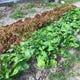 自家栽培で育む四季折々の野菜を使っています