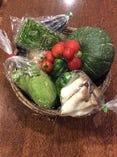 熊本農家から直送の新鮮野菜【熊本県】