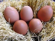 比内地鶏の卵を使用しています