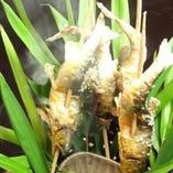 天然魚介類は魚の種類ごとに仕入れる産地を変えているこだわり