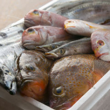 【3時間飲み放題付】オーダーメイドで楽しむ豪華なプラン『極み高級魚三昧コース』[全10品]