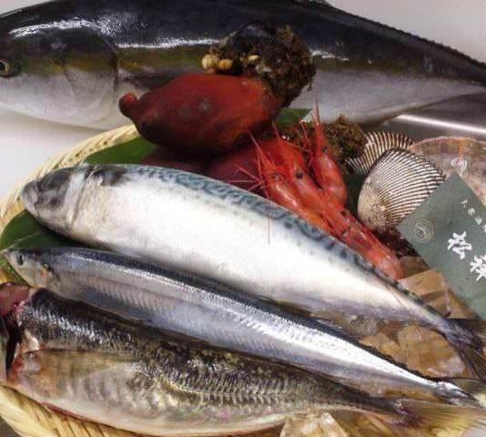 毎日新鮮魚介が楽しめる