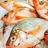 契約産地から毎日届く魚介類【日本各地】