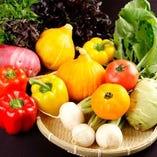 みずみずしい採れ採れ野菜たち【兵庫県】