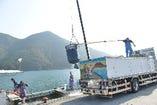 活魚専用のトラックに積み込みます。 大分県佐伯市蒲江から福岡や東京の店舗に自社のトラックで直接届けます。