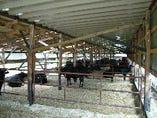 安心・安全な牛肉の仕入れをモットーとしております。