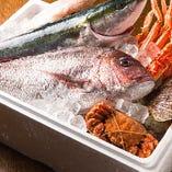 全国各地の直送の旬の鮮魚当店でお召し上がり下さい!