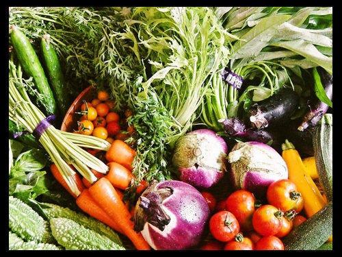 【地産地消】鎌倉野菜が人気です!