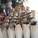 田植え 刈取りはもちろん 乾燥 籾摺りも家でやってます