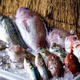 毎日新鮮なお魚たちが届きます!