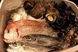 新鮮な鮮魚達【鴨川】