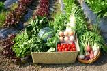 全国各地よりのびっくり野菜OISIX&雲の上ガーデン【全国各地よりのこだわり野菜】