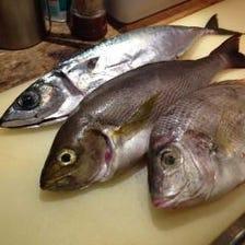 聞いたことのない魚から、定番の魚まで、色んな魚が五島列島から届きます。