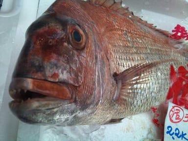活鮨 魚發 神戸三宮  コースの画像