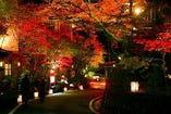 紅葉灯篭ライトアップです。冬は雪ライトアップも しています。