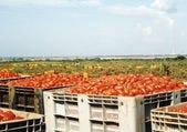 イタリア産トマトが◎