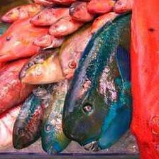 新鮮な沖縄の魚貝類が毎日入荷!