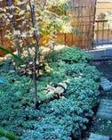 店長自作の庭園
