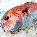 鮮魚【新鮮食材】
