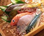 国内各地の港から届く新鮮魚介類【北海道】
