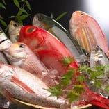毎日仕入れる旬の鮮魚【愛知県】