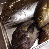 佐島漁港からの活魚・鮮魚【神奈川県】
