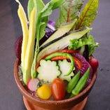 バーニャカウダの植木鉢