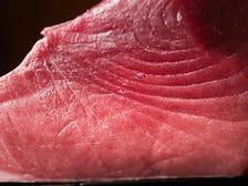 鮮魚の持ち味を極限まで引き出す