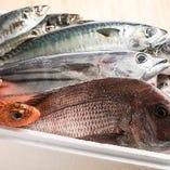 【長崎/北海道/千葉など】全国各地から入荷する新鮮な魚介