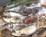 鮮度抜群の旬のセリ買い鮮魚は むつ総合卸売市場より毎日直送♪
