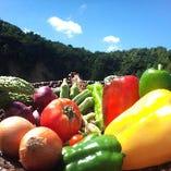 契約農家直送野菜【茨城県】