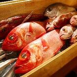 小田原や館山の市場から毎日届く獲れたて鮮魚はお刺身でどうぞ!